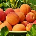 Медики рассказали, кому лучше не есть персики