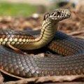 На Олевщині змія вкусила 5-річну дівчинку