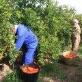 На який строк можна укладати трудові договори з сезонними працівниками?