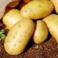 Не сезон для овощей: почему цены не падают