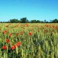 Яскрава і квітуча Житомирщина в погожі літні дні. ФОТО