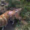 """Голодні і хворі тварини: Як """"піклуються"""" за собаками в новоградському притулку """"Оберіг"""". ФОТО"""