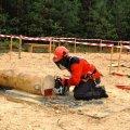На Житомирщині змагатимуться вальники лісу
