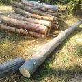 Хто вирубує ліс під Житомиром? ФОТО