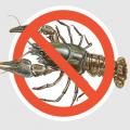 На Житомирщині триває заборона на лов раків