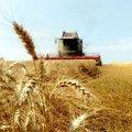 На Житомирщині майже у всіх районах розпочалися жнива: зібрали вже 72 тис. тонн зерна