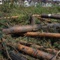 Як нищать український ліс. ВІДЕО