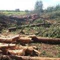 Зеленський провів нараду щодо незаконної вирубки лісу