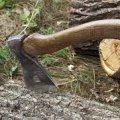 На Житомирщині поліцейські викрили лісокрада