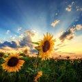 Прогноз погоди в Житомирі на 20-21 липня