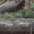 Винищення лісів Житомирщини зняли з квадрокоптера