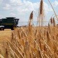 Жнива в Україні: аграрії вже зібрали понад 21 млн тонн зерна