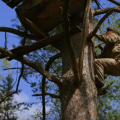 Селезівка – унікальний куточок України, де відроджують бортництво. ВІДЕО