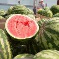 Спасительная ягода при раке и диабете: Уникальное свойство арбуза