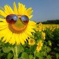 29 липня у Житомирі температура повітря становила 25º тепла