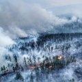 Пожежі в Сибіру: У РФ може не залишитися промислового лісу