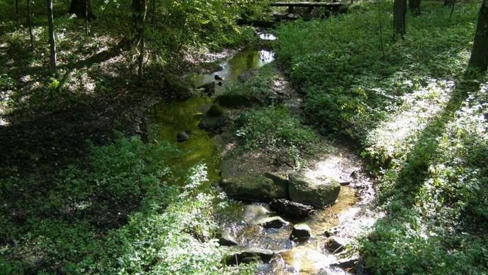 Городницький парк - пам'ятка садово-паркового мистецтва загальнодержавного значення. ФОТО