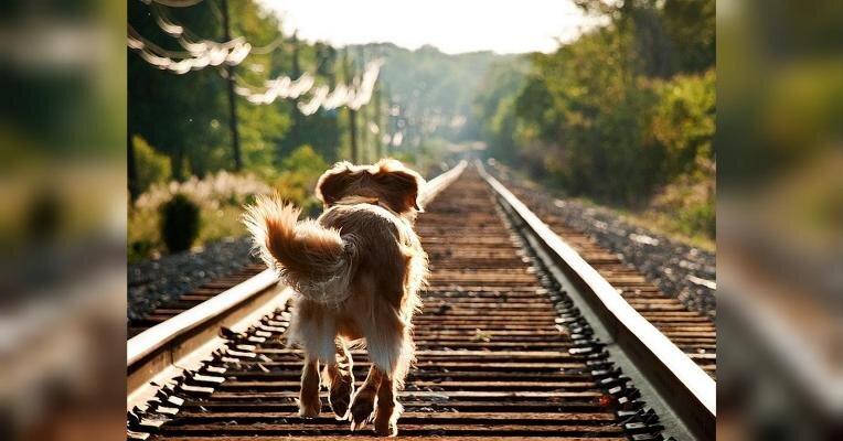 12-летняя житомирянка Вероника едва не погибла под колесами поезда, пытаясь спасти своего любимого л ...