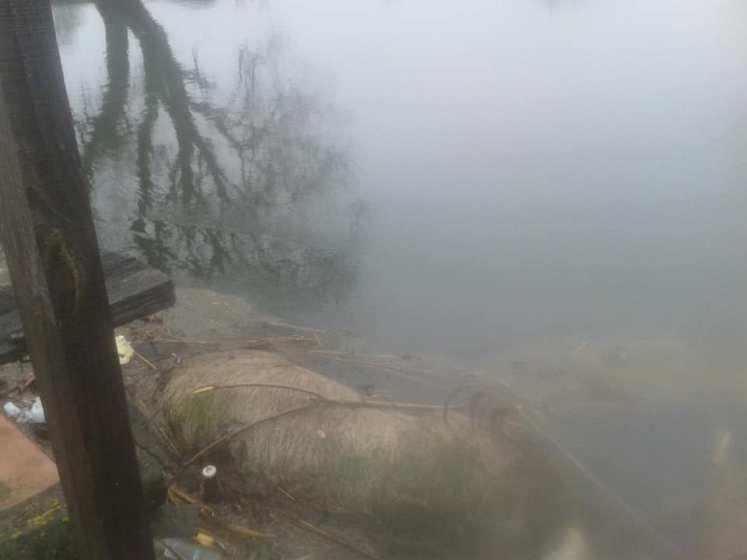 В річці Тетерів випадково знайшли величезний труп тварини. ФОТО