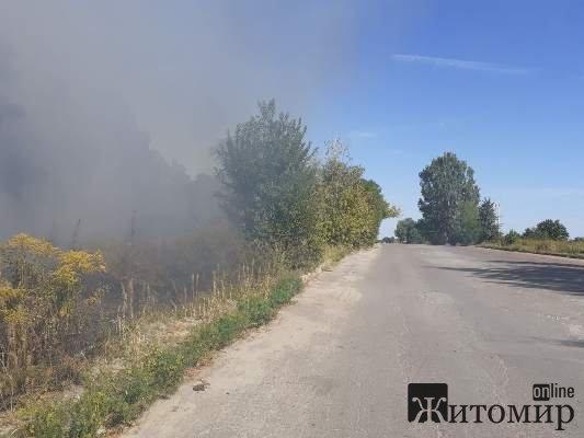 Пожежа в лісі у районі Паперової фабрики. ФОТО