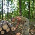 На підприємстві всі заготовлені та реалізовані лісоматеріали проходять через систему електронного обліку деревини