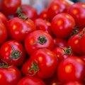 Украинцев пугают рекордные цены на помидоры: когда подешевеют томаты
