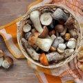 У Житомирській області до реанімації потрапила бабуся, отруївшись грибами