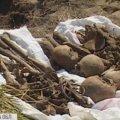Моторошна знахідка на території зниклого села на Житомирщині. ВІДЕО