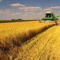 У 5 районах Житомирщини вже завершують збір ранніх зернових