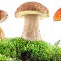 Отруєння грибами – причини та застереження