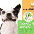До Дня ветеринара на Михайлівській пройде благодійна акція на підтримку безпритульних тварин