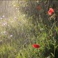 На Житомирщині очікуються дощі, грози та шквали
