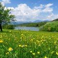 Прогноз погоди в Житомирі на 15 серпня