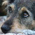 Житомиряни вкотре піднімають питання щодо зменшення кількості безпритульних тварин. ПЕТИЦІЯ