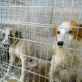 У Новограді продовжують стерилізувати безпритульних собак. ФОТО