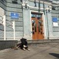 У Житомирі чисельність безпритульних собак скоротилась на 20%