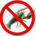 На Житомирщині діє заборона на лов раків