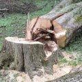 Ініціатива покарана законом: 340 грн штрафу довелось сплати бердичівлянину за самовільно зрізане дерево