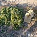 У рюкзаках двох молодиків з Чуднівського району виявили 10 кг коноплі