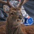 Вольєр плямистих оленів в селі Явне на Баранівщині. ФОТО