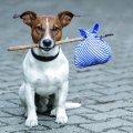 У Житомирі невідомі труять безпритульних тварин