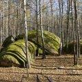 Заказник на Житомирщині називають справжнім дивом природи, а ще - українським Стоундхенждем. ФОТО