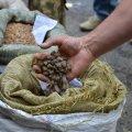 На Житомирщині викрили суддю, адвоката та слідчу, які допомагали копачам бурштину
