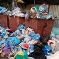 Сміттєвий колапс у Бердичеві триває.ФОТО