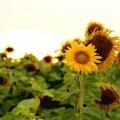 Прогноз погоди на добу 31 серпня по Житомиру та області