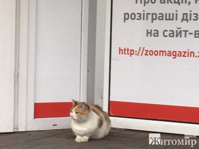 Котячий рай у Житомирі. ФОТО