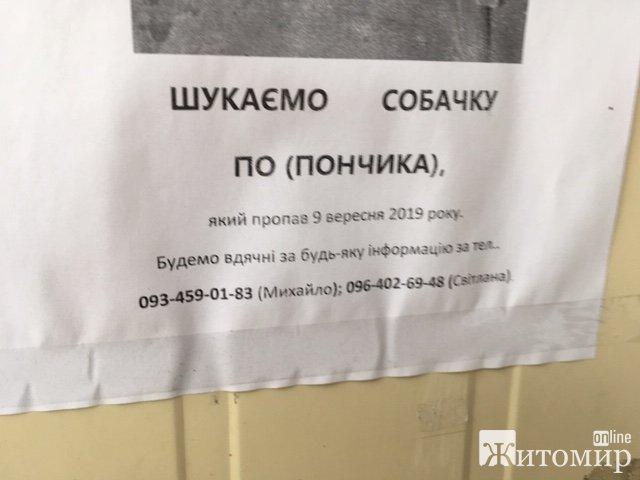 У Житомирі шукають і ніяк не можуть знайти улюбленого Пончика. ФОТО