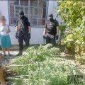 На Житомирщині викрили 3 банди наркоторговців