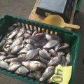 Як працювали рибоохоронці Житомирщини у серпні