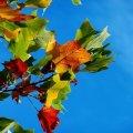 12 сентября: какой сегодня праздник и что нельзя делать